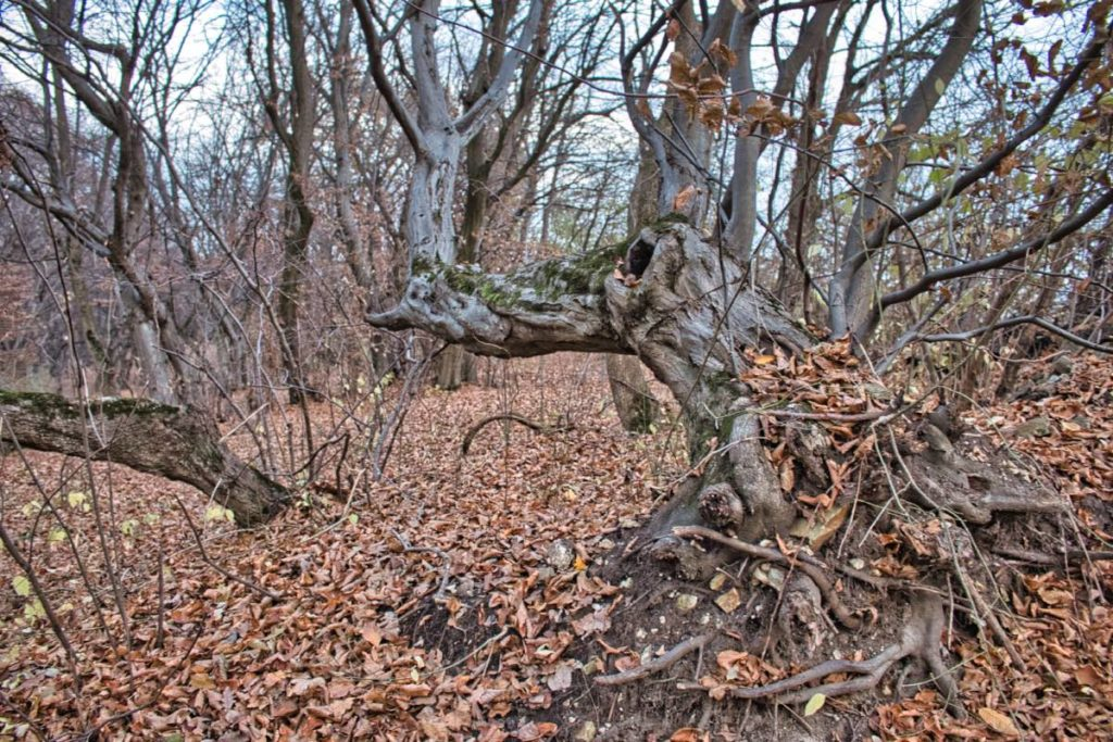 Witch forest Hoia Cluj
